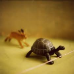 make haste slowly tortoise and hare
